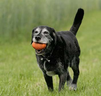 Treating arthritis in dogs with stem cells