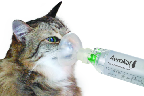 Treating Feline Asthma with Stem Cell Therapy