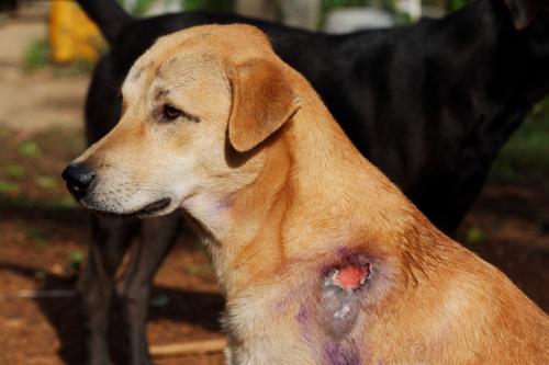 Non-healing wound