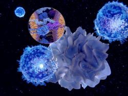 Immune Modulation